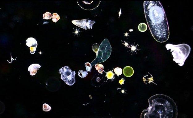 11-28 plankton1_0