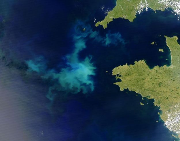 Coccolithophore bloom off Brittany, France. Jacques Descloitres, MODIS Rapid Response Team, NASA/GSFC. Public domain.