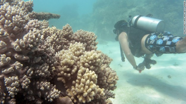 Coral bleaching, Great Barrier Reef. The once-abundant fish are gone.