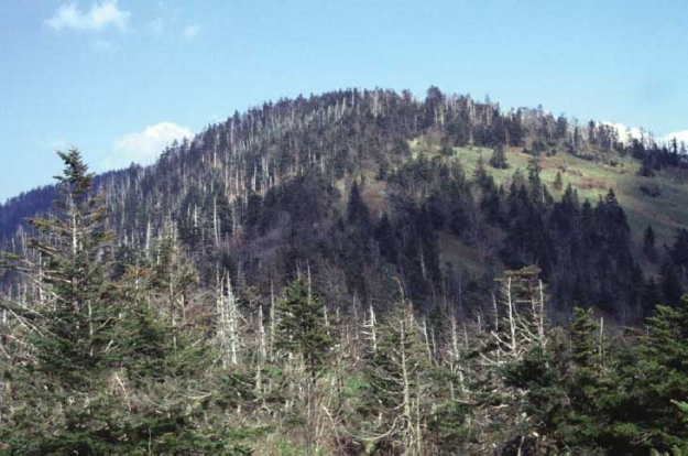 Ghost forest on Clingmans Dome. US Geological Survey photo. Public domain. Wikimedia Commons.