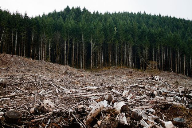 Clear-cut forest. Photo by Calibas. CC BY-SA 3.0. Wikimedia Commons.