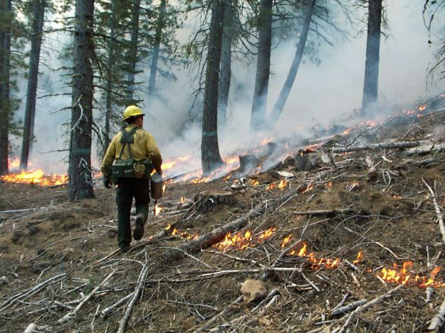 Prescribed burn in northern California (CN Skinner / US Forest Service)